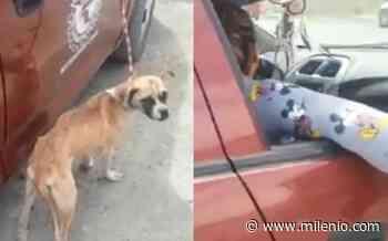 Captan a mujer maltratando a perrito en La Laguna - Milenio