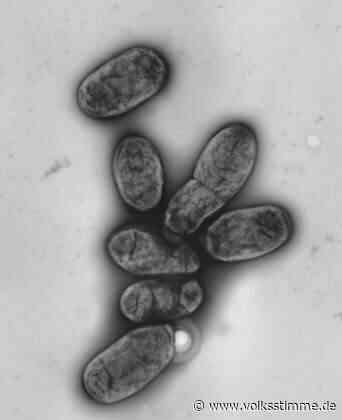 Coronavirus: Haldensleben überstand mehrere Epidemien - Volksstimme