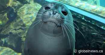 Assiniboine Park Zoo livestream animal talks during coronavirus closure