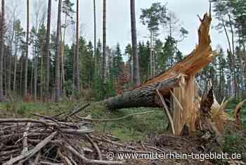 Lahnstein - Umwelt: Auch die Wanderwege leiden mit dem Wald - Wegen Borkenkäferbefall müssen kranke Fichten geerntet werden - Mittelrhein Tageblatt
