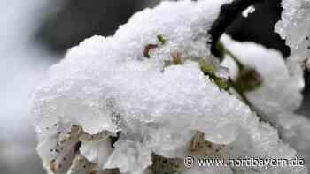 Ernteausfälle befürchtet: Obstbauern wappnen sich gegen Frost - Nordbayern.de