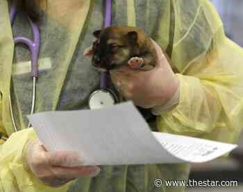 Veterinarians offer ventilators as they fight to be declared essential service