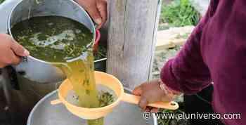 Indígenas de cantón Cotacachi crean desinfectantes con plantas medicinales y dicen que previene el coronavirus - El Universo