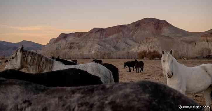 A mustang crisis looms in the West