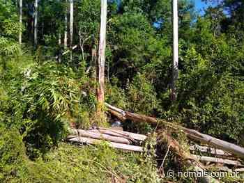 Homem morre ao ser atingido eucalipto em Palmitos - ND - Notícias