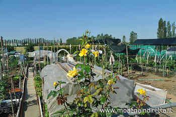 A Modena chiudono orti per anziani e fontanelle dell'acqua - modenaindiretta.it