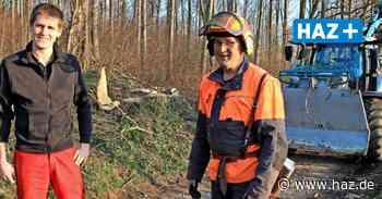 Gehrden: Gefahrenabwehr am Burgberg: Rund 60 alte Bäume müssen weg - Hannoversche Allgemeine