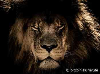 Binance und Brave geben Partnerschaft bekannt: Was kann der Krypto-Browser? - Bitcoin Kurier