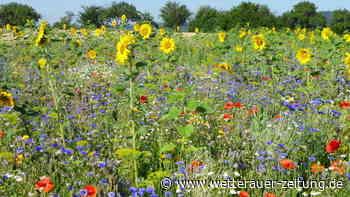 Blühpatenschaft in Karben: Landwirt stellt besonderes Projekt vor | Karben - Wetterauer Zeitung
