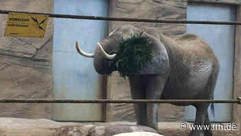 Harte Zeiten für den Opel-Zoo in Kronberg - HIT RADIO FFH