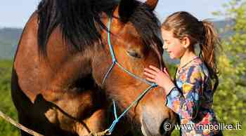 Adotta un cavallo durante l'emergenza COVID-19: scegli il tuo preferito - Napolike