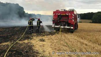 Seine-Maritime : 5000m2 de broussailles partent en fumée à Oissel - InfoNormandie.com