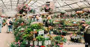 Coronavirus: Calgary gardening centres ramp up deliveries during pandemic