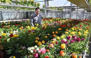 Gärtnereien liefern jetzt - Deggendorf/Metten - Passauer Neue Presse