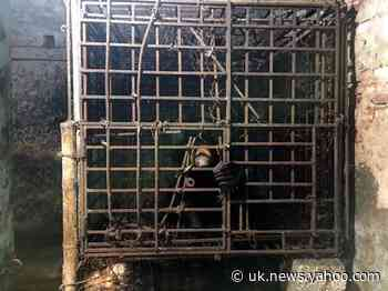 Coronavirus: China promotes bile from caged bears to treat pandemic 'caused by exploiting wildlife'