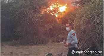 Incendio forestal arrasa con bosques de algarrobos en Jayanca - Diario Correo