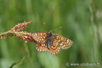 Formations INSECTES – Les papillons de jour 1 juin 2020 - Unidivers