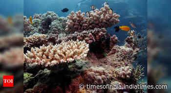 Australia reef sees 3rd coral bleaching in 5 years