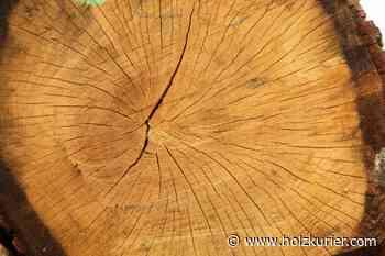 95% Eiche bei Submission Iphofen - Holzkurier