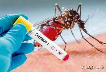 Alarma el aumento de casos de dengue en El Grullo - UDG TV