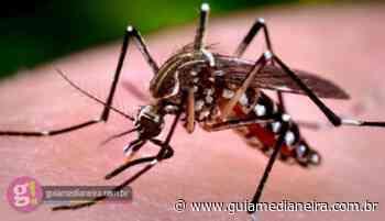 Missal está com 87 casos de dengue confirmados - Guia Medianeira