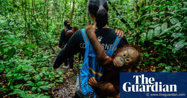 Wildlife rescue centres struggle to treat endangered species in coronavirus outbreak