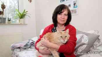 Katzen in Not ein Zuhause geben - Kaufungerin bietet Pflegestelle an - HNA.de