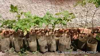 Reforestación: se sumaron al patrimonio verde de El Cadillal 500 nuevos árboles - La Gaceta Tucumán