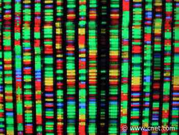 Best DNA test in 2020: 23andMe, AncestryDNA and more compared     - CNET