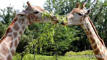 Plaisance-du-Touch. Les animaux du zoo solidaires des humains - LaDepeche.fr