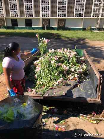 Coronavírus: Holambra perde R$ 297 milhões com queda nas vendas de flores e prevê falência de 66% dos produtores - G1