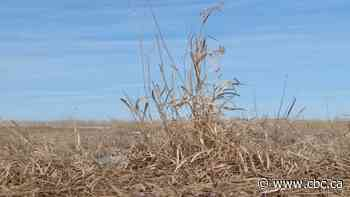 Farmers concerned about disruptions to spring seeding, livestock operations amid COVID-19