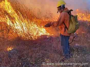 Incendio activo en Oxkutzcab ya consumió 500 hectáreas - Yucatán a la mano