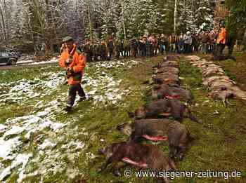 Zwei Schwestern setzen sich durch: Erste jagdfreie Zonen im Kreis - Siegener Zeitung