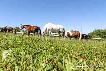 Reiterwelt Pferdesteuer in Tangstedt Oberverwaltungsgericht beendet den Rechtsstreit Der Rechtsstreit um die Pferdesteuer in Tangstedt ist - Cavallo.de