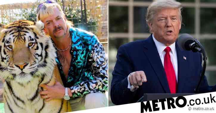 Donald Trump compared to Tiger King's Joe Exotic in savage Trevor Noah burn