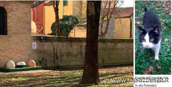 Piove di Sacco, una casa per i 5 gatti che vivono all'ospedale - La Piazza