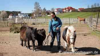 Auch die Pferde im Raum Forchheim haben zu knabbern - Nordbayern.de