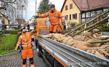 """Radolfzell: Klimaschutz zum Schnäppchen-Preis: Radolfzell liefert Bäume im Rahmen der Klimaschutz-Aktion """"Ein Bürger, ein Baum"""" frei Haus - SÜDKURIER Online"""