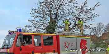 Langenhagen - Feuerwehr Krähenwinkel rettet Krähe aus Baum - Neue Presse