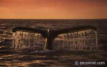 Bitcoin Whale Sends 5,500 BTC to Binance Worth $33.8M - Bitcoinist