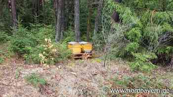 Kemnath: Fünf Bienenvölker gestohlen - Nordbayern.de