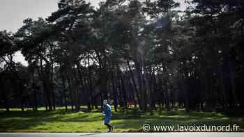 Confinement : la forêt de Vimy interdite au public - La Voix du Nord