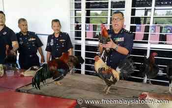 Farmer nabbed at cockfight, 9 caught at sepak takraw game - Free Malaysia Today