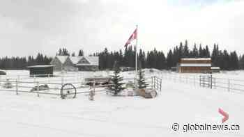RCMP investigating deaths of 2 people near Sundre | Watch News Videos Online - Globalnews.ca