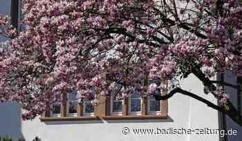 Blütenpracht auf Zeit - Steinen - Badische Zeitung