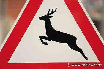 Zeitumstellung erhöht das Wildunfall-Risiko im Kreis Warendorf - Radio WAF