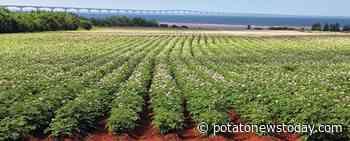 Canada: How COVID-19 influenced the potato industry on Prince Edward Island - Potato News Today