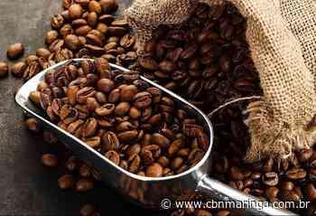 Café em coco custa R$ 8,10 o quilo em Umuarama - CBN Maringá