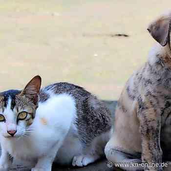 Chinesische Stadt verbietet Verzehr von Hunden und Katzen